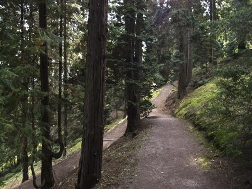 Forstbotanischer Wald