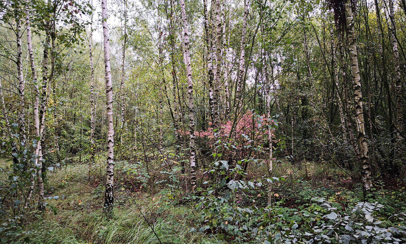 Waldsaum Blausteinsee
