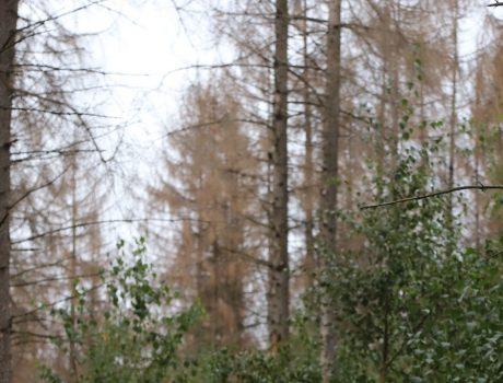 Wald im Umbruch