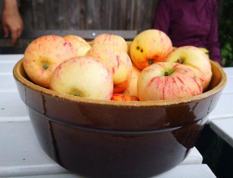 Apfel bringt Erkenntnis