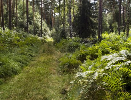 WaldWerken