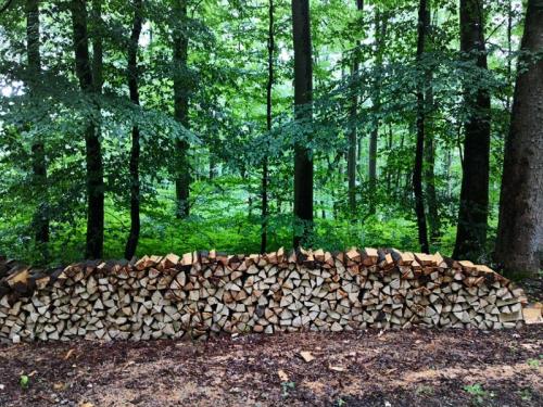 Forst-Wirtschaft