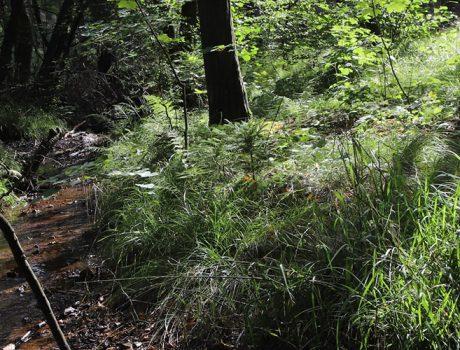 Durch Wald und über Erz