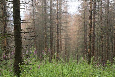 WaldWandel